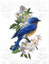 Special Bluebird Birthday card