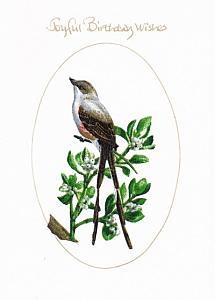 Scissortailed Flycatcher