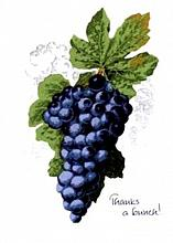 TY Grapes