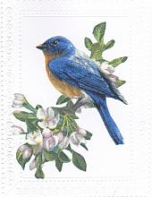 Bluebird  Any Occasion card